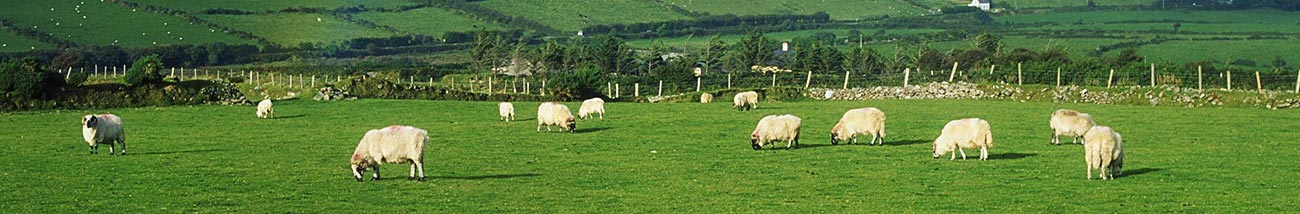 Kerry Quality Lamb Cuts